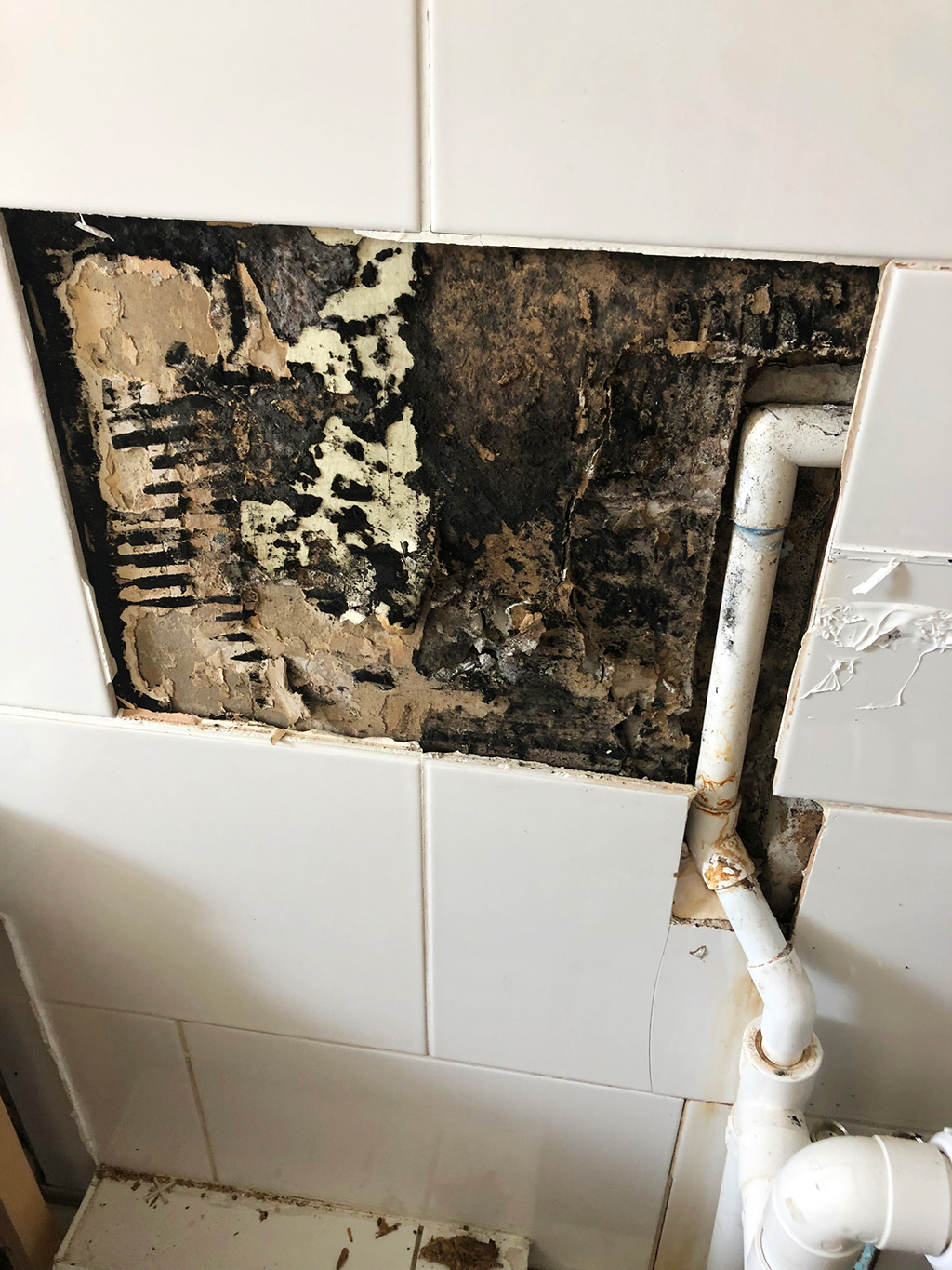 Mold Is a Plumbing Issue? It Can Be if You Make These Mistakes